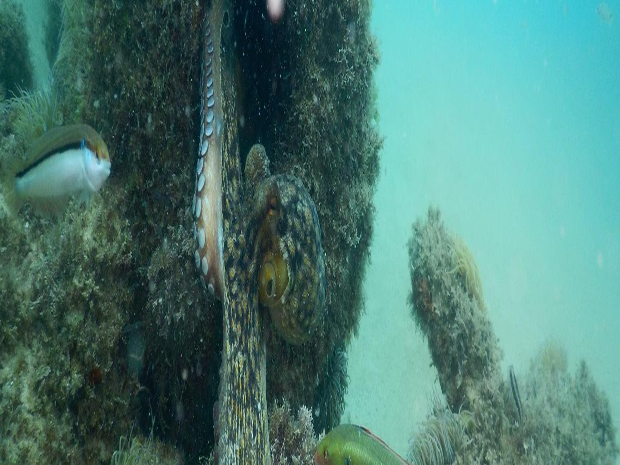 Scuba Diving Course - PADI Divemaster